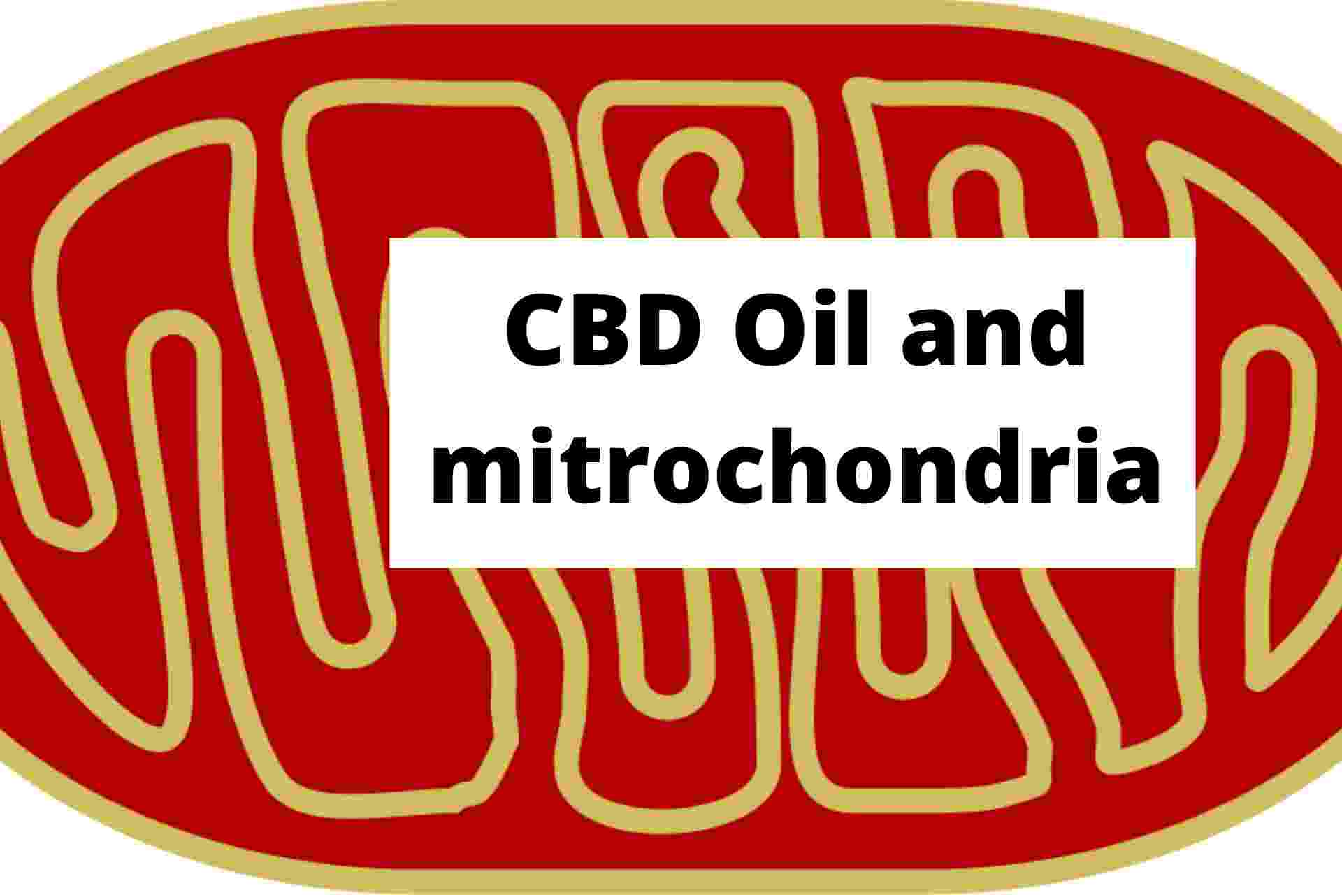 CBD Oil and mitrochondria