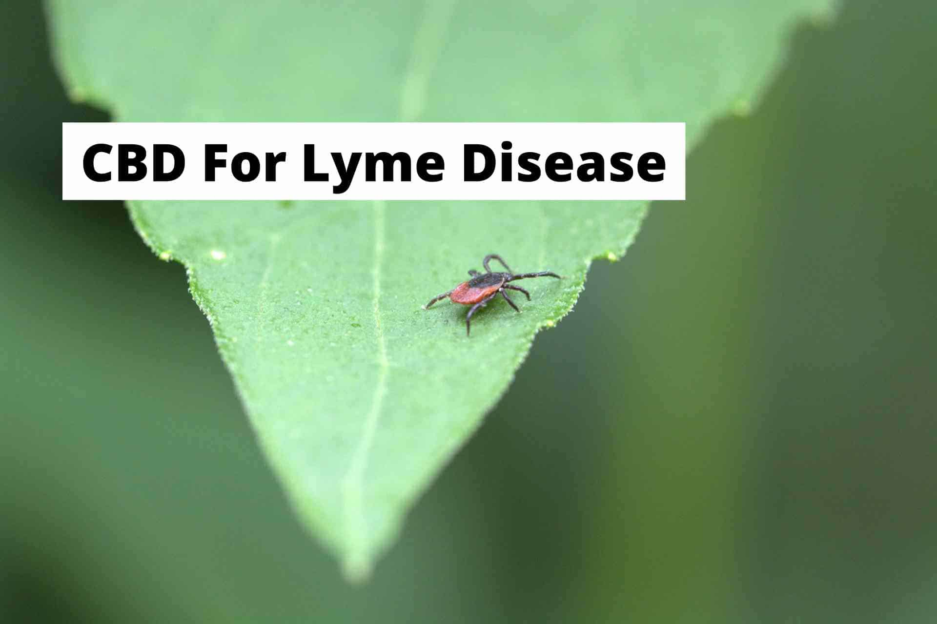 CBD for Lyme Disease