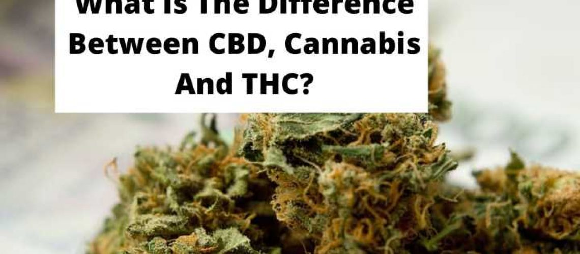 What Is The Difference Between CBD, Cannabis And THC
